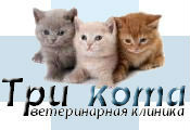 РОБО СПБ ВИЦ ветеринарная клиника Три кота